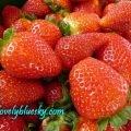 金马伦纪念品店:草莓泛滥