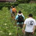 槟城旅游:康富有机蔬果园 Comfort Organic Farm