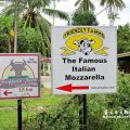 兰卡威景点:The Famous Italian Mozzarella Friendly Farms