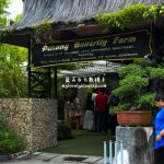 槟城景点:蝴蝶公园 Penang Butterfly Farm
