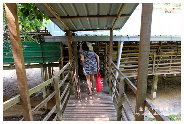 20140118_Balik-Pulau_0103