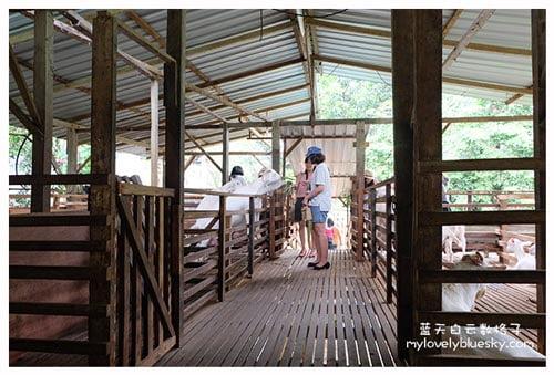 Saanen Dairy Goat Farm 莎能牧羊场