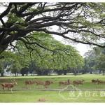 印尼雅加达Jakarta旅游:Istana Bogor & Museum Kepresidenan Republik Indonesia