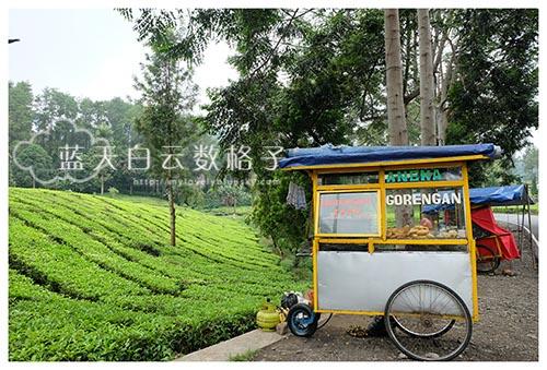 Jakarta-Savvy-3800
