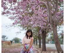 """槟城旅游:峇六拜工业区追风铃木""""赏樱"""""""
