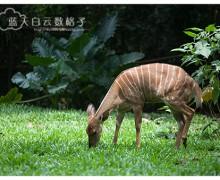 马六甲景点 : 马六甲动物园 Zoo Melaka