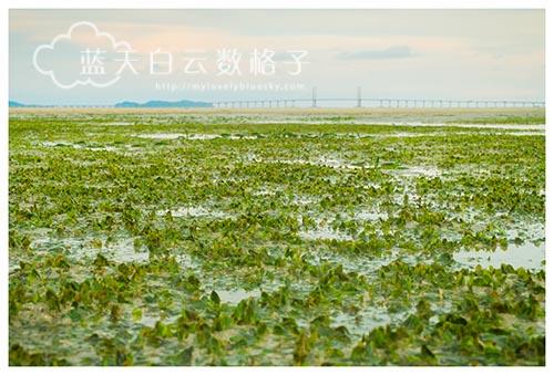 爱护环境:槟城中间滩Middle Bank 海草床