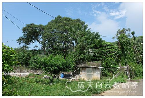 台中新社旅游:马力埔小区导览