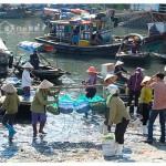 越南下龙湾旅游:Chợ Hạ Long 农贸市集 HaLong Market
