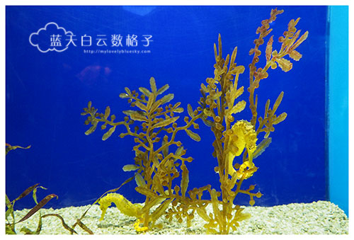 新加坡圣淘沙海底世界 Underwater World Singapore 走入历史