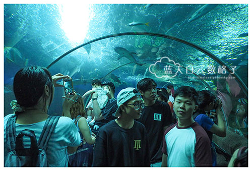 20160622_Underwaterworld_0080