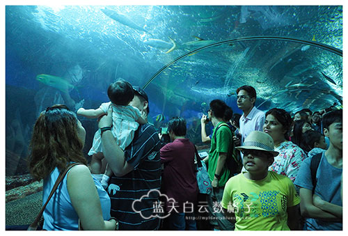 20160622_Underwaterworld_0082