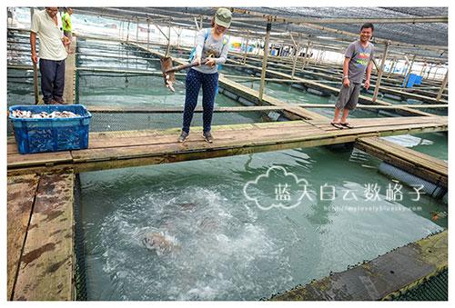 槟城美食:天天鱼海鲜村(全槟最便宜吃龙趸鱼和龙虎斑)