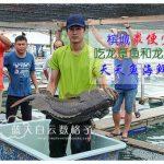 槟城美食:天天鱼海鲜村(全槟最便宜吃龙趸和龙虎斑)