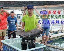 槟城美食 | 天天鱼海鲜村(全槟最便宜吃龙趸和龙虎斑)