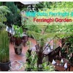 槟城 Batu Ferringhi 美食:Ferringhi Garden