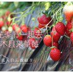 日本栃木县真岗市:井头观光草莓园 和 道の駅 にのみや(Michino-eki Ninomiya)