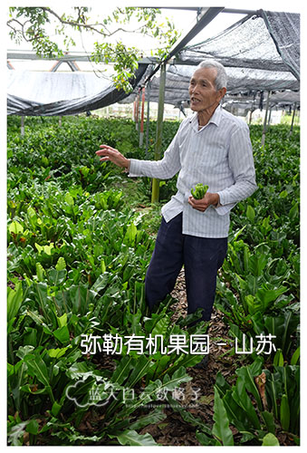 20170221_Hua-Lian-Tai-Tung-Taipei_0477