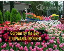 Gardens by the Bay : Tulipmania Inspired @ Flower Dome