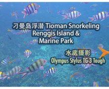 Olympus Stylus TG-3 Tough : 刁曼岛浮潜 Renggis Island & Marine Park Snorkeling