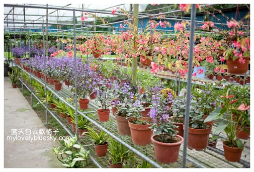 Genting Strawberry Leisure Farms-Lavender Farm