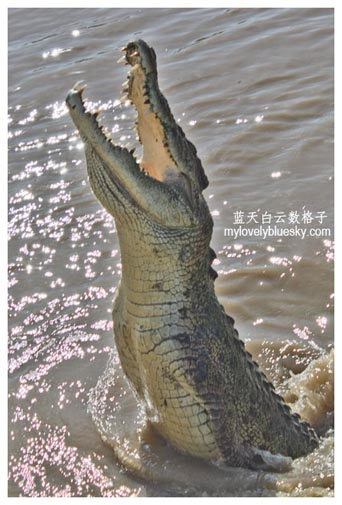 Spectacular Jumping Crocodile Cruise