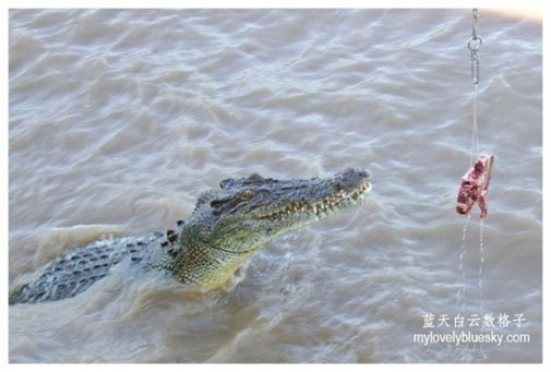 20130826_Australia_Northern_Territory_0509