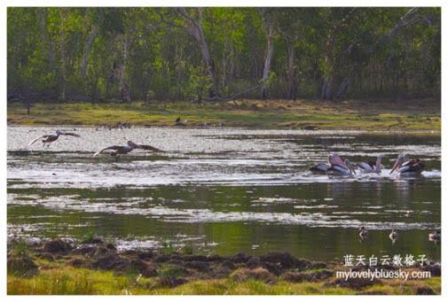 20130826_Australia_Northern_Territory_0802