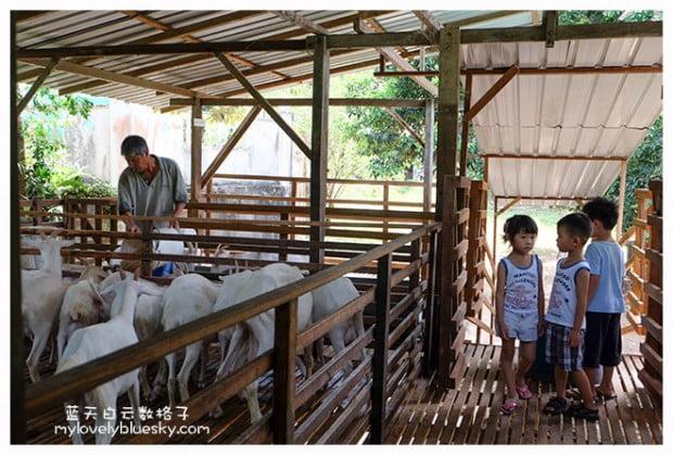 浮罗山背莎能牧羊场 Saanen Dairy Goat Farm