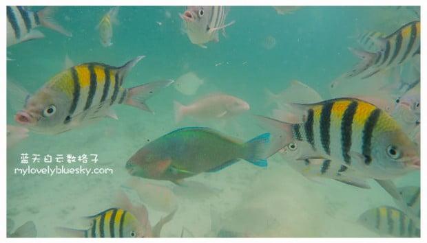 热浪岛旅游:Marine Park