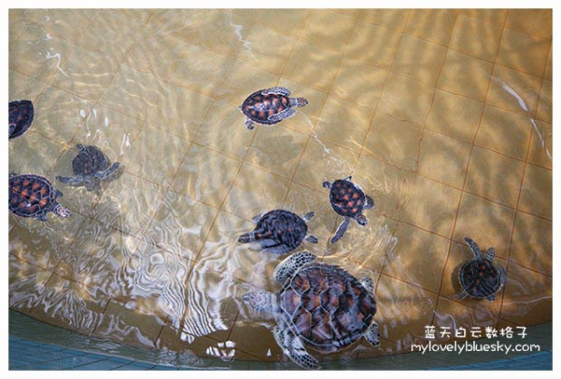 海龟保育中心 Turtle Conservation And Information Center
