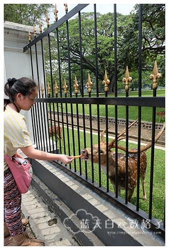 印尼雅加达Jakarta旅游:Istana Bogor