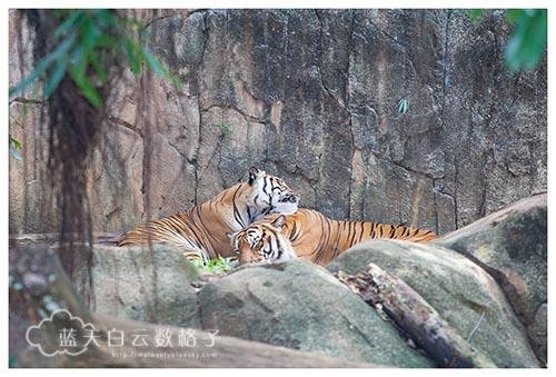 马六甲景点:马六甲动物园 Zoo Melaka
