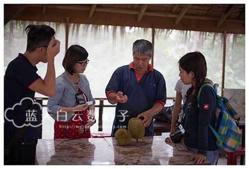 槟城美食:浮罗山背莎能牧羊场吃榴莲