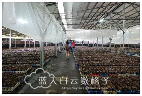 台中新社景点:百菇庄