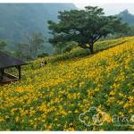 台中新社旅游:沐心泉休闲农场
