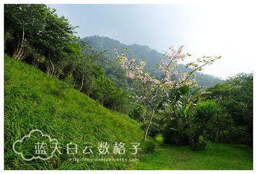http://peach-river.com.tw/home2.html