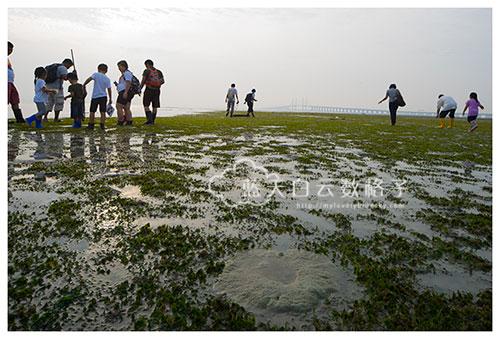 Pulau  Gazumbo海草床