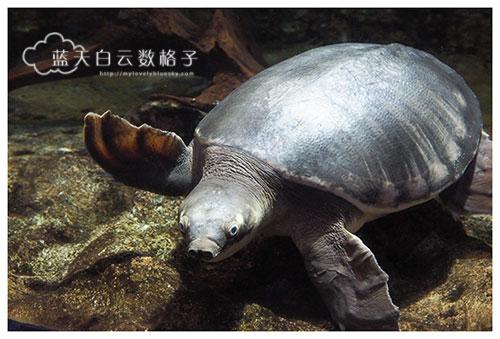20160622_Underwaterworld_0038