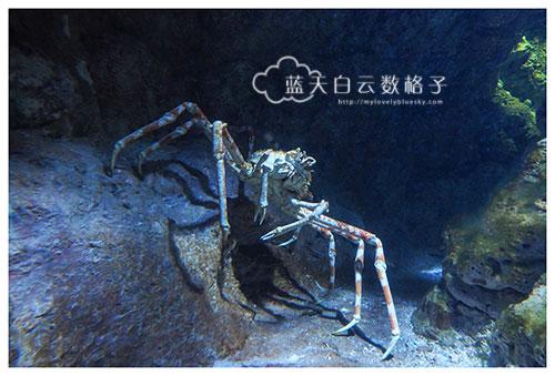 20160622_Underwaterworld_0043