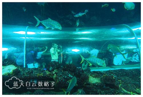 20160622_Underwaterworld_0049