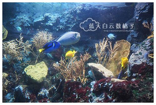 20160622_Underwaterworld_0071
