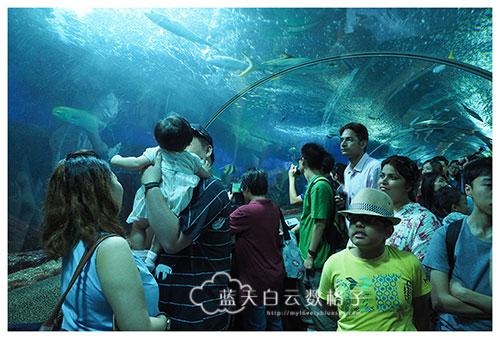 20160622_Underwaterworld_0082