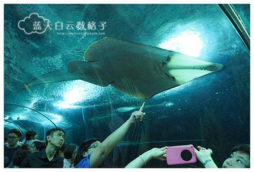 20160622_Underwaterworld_0112