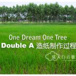 One Dream One Tree: Double A 造纸制作
