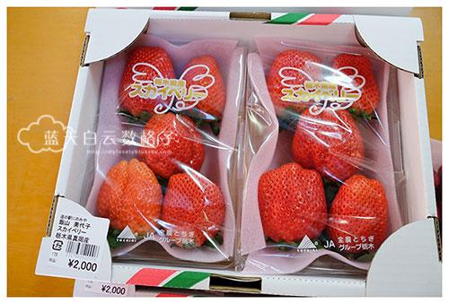 井头观光草莓园