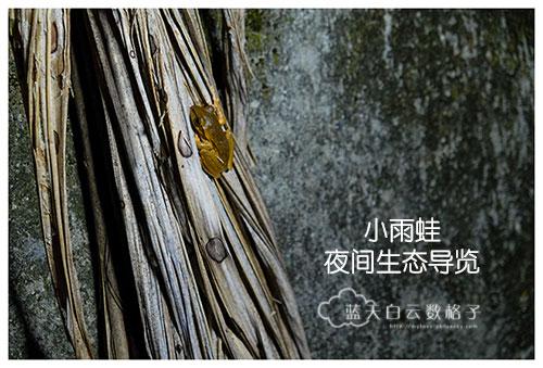 20170219_Hua-Lian-Tai-Tung-Taipei_1818