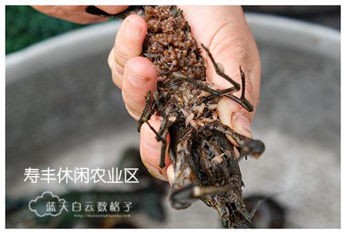 20170220_Hua-Lian-Tai-Tung-Taipei_1106