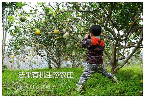 20170221_Hua-Lian-Tai-Tung-Taipei_0636
