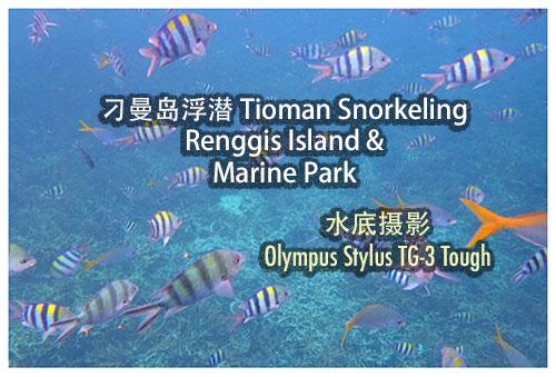 刁曼岛浮潜 Renggis Island & Marine Park Snorkeling